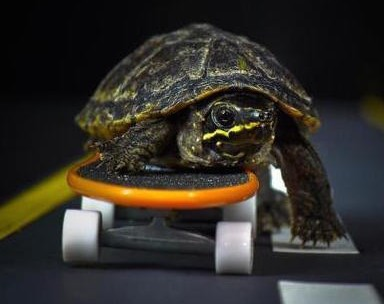 Turtles-skating-the-streets